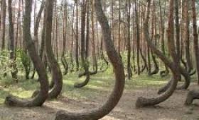 Pădurea cocoşaţilor