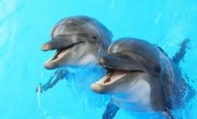 SMURD  pentru delfini