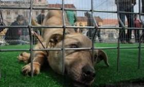 Dezbaterea Ponta – Johannis, câine surd la vânătoare